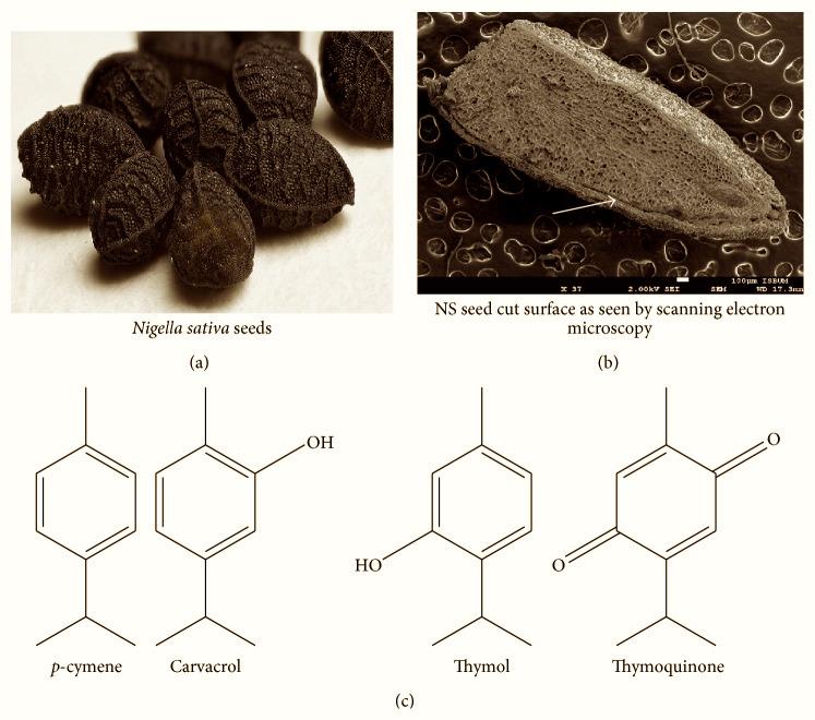 nigellas-seed-thymoquinone