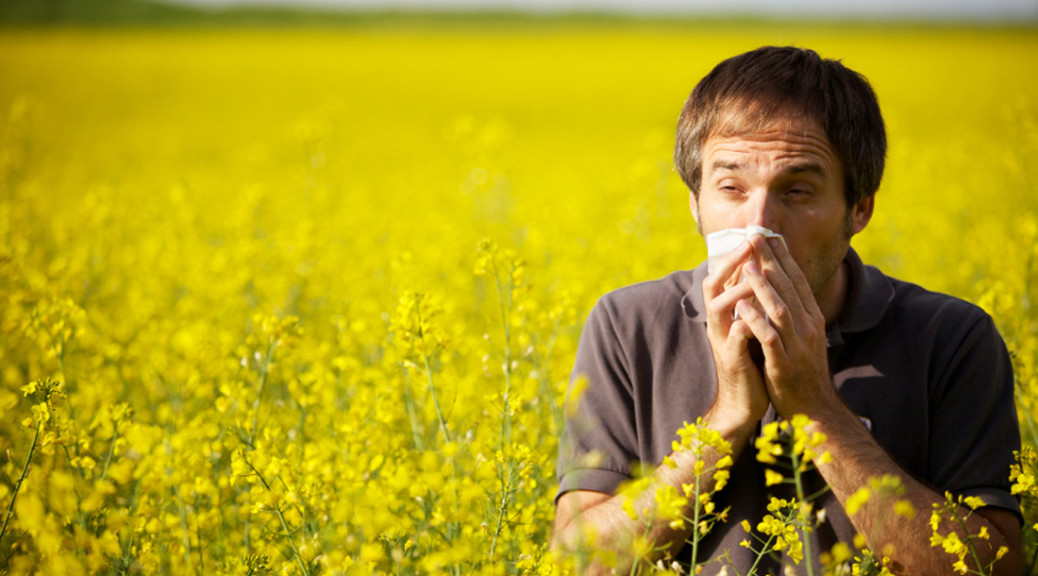 black seed oil hay fever allergic rhinitis