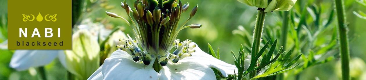 black seed oil header